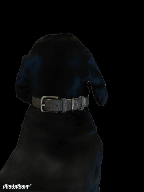 Achteraanzicht teckel halsband