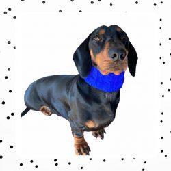 blauwe teckel sjaal